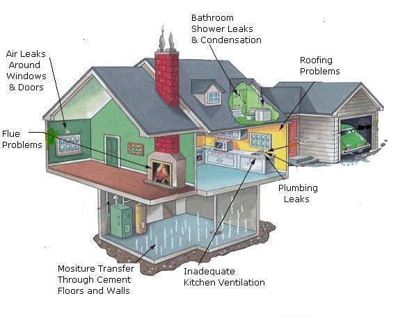 House mold sources
